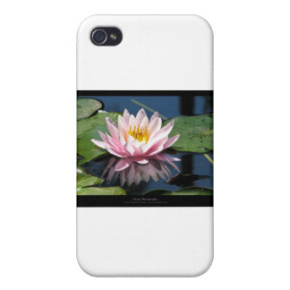 Just a flower – Pink waterlily flower 007 iPhone 4/4S Covers