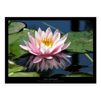 Just a flower – Pink waterlily flower 007 Postcard