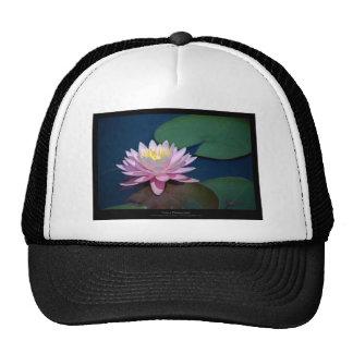 Just a flower – Pink waterlily flower 008 Mesh Hat