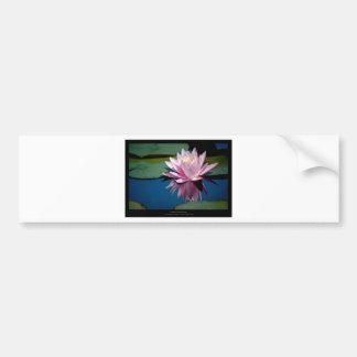 Just a flower – Pink waterlily flower 009 Bumper Sticker