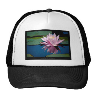 Just a flower – Pink waterlily flower 009 Mesh Hats