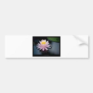 Just a flower – Pink waterlily flower 037 Bumper Sticker