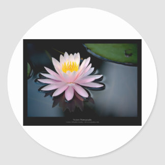 Just a flower – Pink waterlily flower 037 Stickers