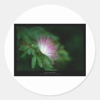 Just a flower – Pink & White flower Caliandra 011 Round Sticker