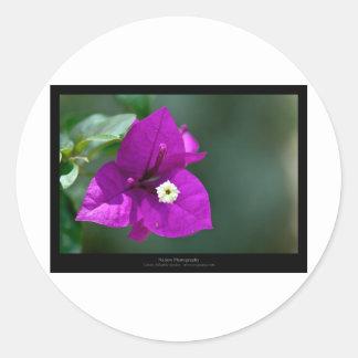 Just a flower – Purple flower Bouganvillea 010 Sticker