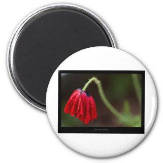 Just a flower – Red flower Poppy 012 6 Cm Round Magnet
