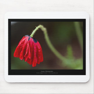 Just a flower – Red flower Poppy 012 Mouse Pad