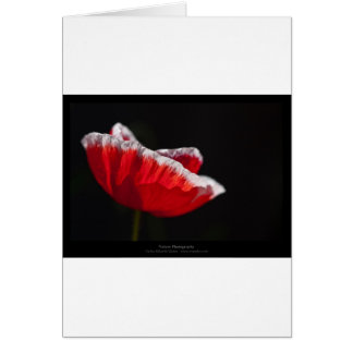 Just a flower – Red poppy flower 014 Greeting Card