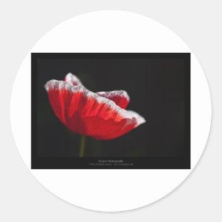 Just a flower – Red poppy flower 014 Stickers
