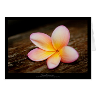 Just a flower – Simple flower 003 Greeting Card
