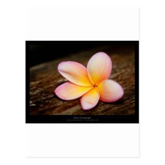 Just a flower – Simple flower 003 Postcard