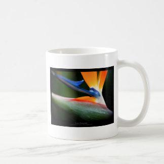 Just a flower – Strelitzia flower 013 Basic White Mug