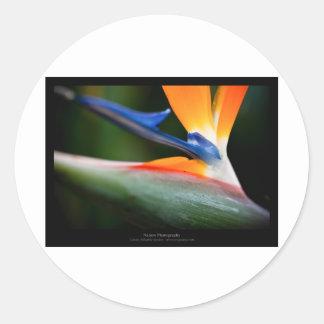Just a flower – Strelitzia flower 013 Round Stickers