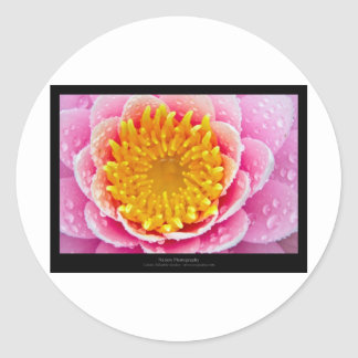 Just a flower - waterlily 001 round stickers