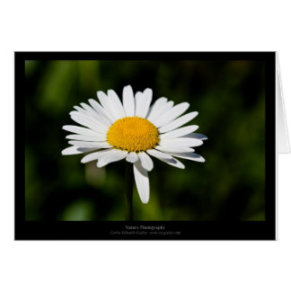 Just a flower – White daisy 005 Greeting Cards