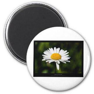 Just a flower – White daisy 005 6 Cm Round Magnet