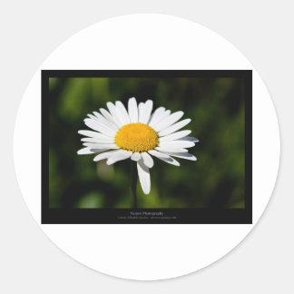 Just a flower – White daisy 005 Round Sticker