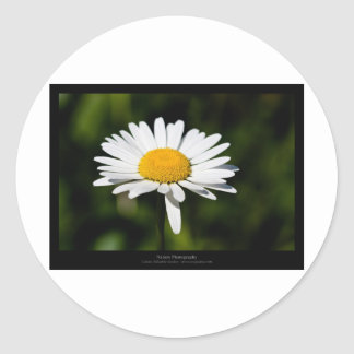 Just a flower – White daisy 005 Sticker