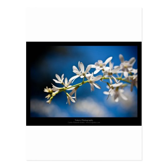 Just a flower – White flower 004 Postcard
