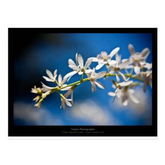 Just a flower – White flower 004 Postcard