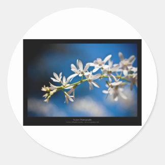 Just a flower – White flower 004 Round Sticker