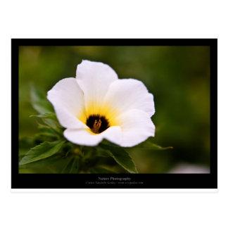 Just a flower – White flower 019 Postcard