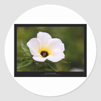 Just a flower – White flower 019 Round Stickers