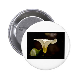 Just a flower – White lily flower 018 6 Cm Round Badge