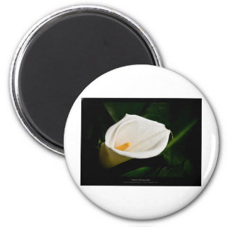 Just a flower – White lily flower 020 6 Cm Round Magnet