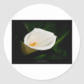Just a flower – White lily flower 020 Round Stickers