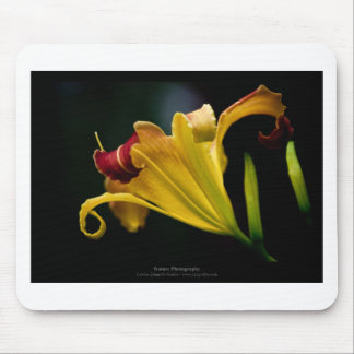 Just a flower – Yellow lily flower 016 Mouse Pads