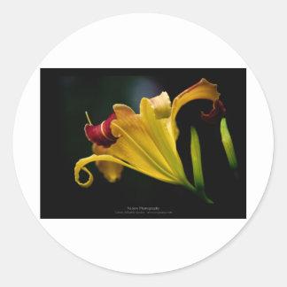Just a flower – Yellow lily flower 016 Round Sticker