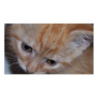 Just a Kitten Business Card Templates