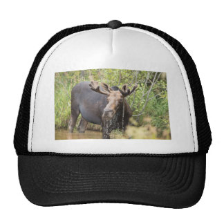 Just a Moosin Mesh Hat
