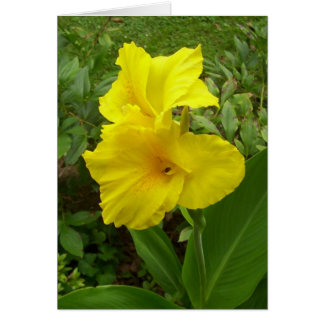 JUST A NOTE CARD- PHOTO OF YELLOW IRIS CARD