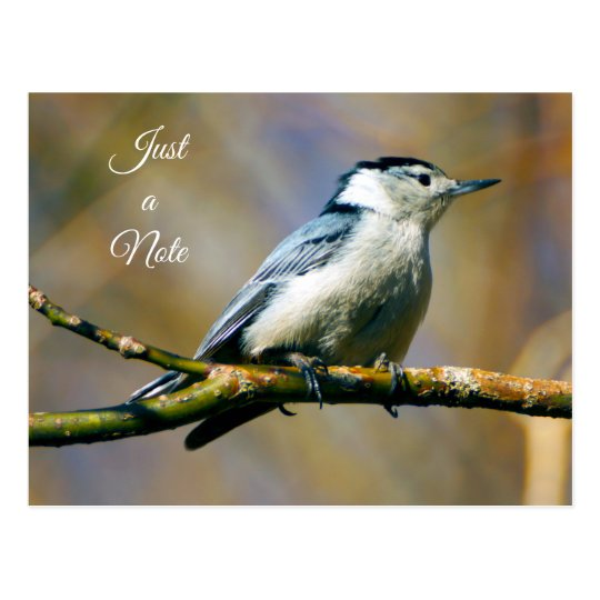 Just a Note White Breasted Nuthatch Postcard