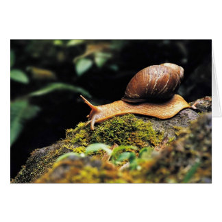 Just a snail greeting card