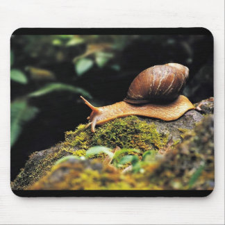 Just a snail mouse pad