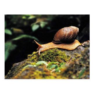 Just a snail postcard