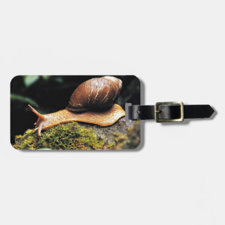 Just a snail tag for bags