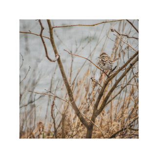 Just a Wee Birdy in the Rain Canvas Print