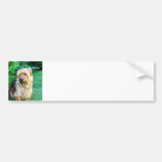 Just another day for a Silky Yorkie Terrier Bumper Sticker