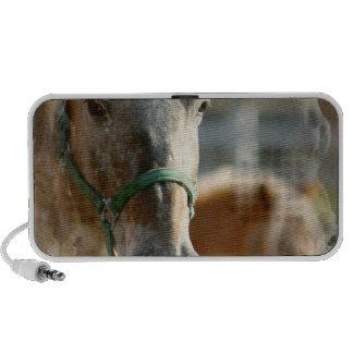 Just Appaloosa Horse Speakers