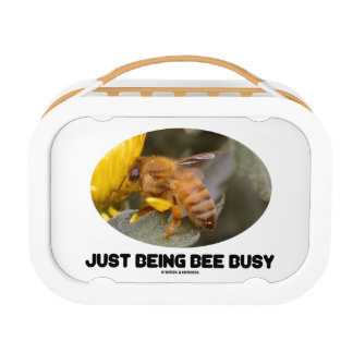 Just Being Bee Busy (Bee On Yellow Flower) Lunchbox