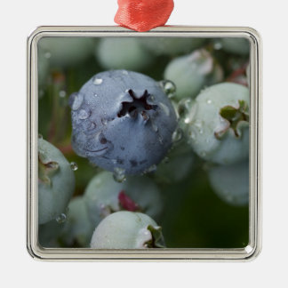 Just Blue - Blueberry macro Silver-Colored Square Decoration