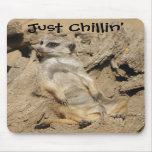 Just Chillin' Meerkat Photo Mouse Pad