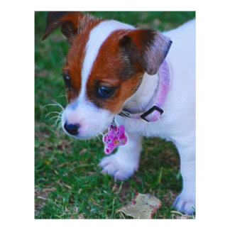 Just Cute 21.5 Cm X 28 Cm Flyer