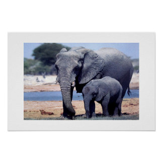 JUST ELEPHANTS POSTER