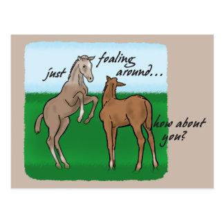 Just Foaling Around Postcard