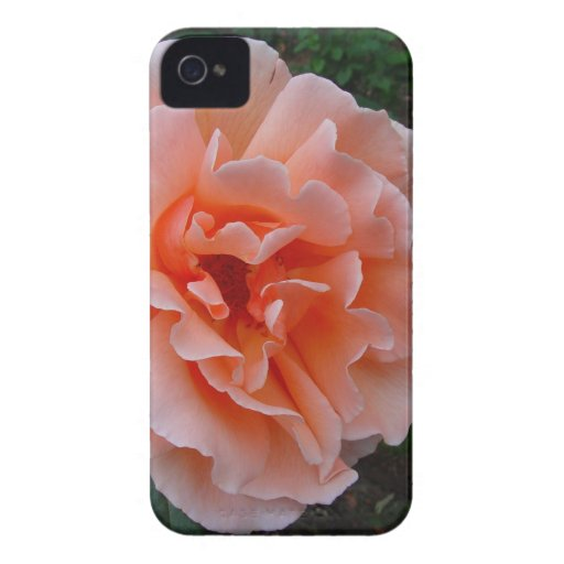 Just Joey Hybrid Tea Rose iPhone 4 Case-Mate Case